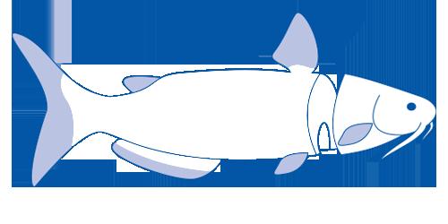 Freshwater Farms - Catfish